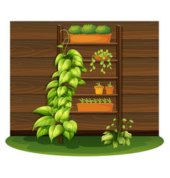 gardening scene with flowerpots on shelves vector image