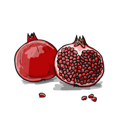 Pomegranate sketch for your design vector