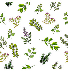 Hand drawn herbs and spices vector