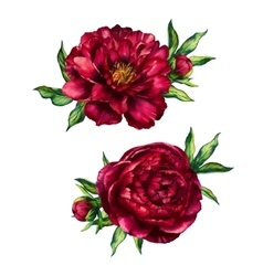 Set of watercolor red peonies bouquets vector image