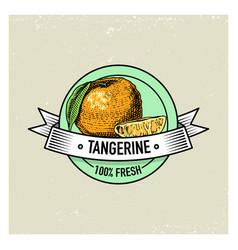 tangerine vintage hand drawn fresh fruits vector image vector image