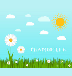 Spring green grass with chamomile landscape vector