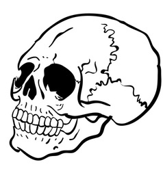 Black and white another skull vector