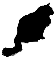 Cat black vector