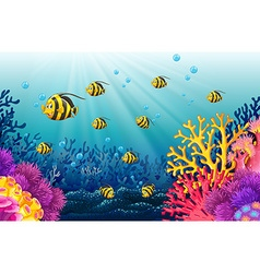 Lots of fish under the sea vector