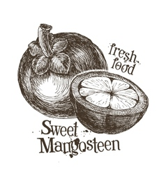 Mangosteen logo design template fresh fruit food vector