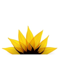 Sunflower part vector