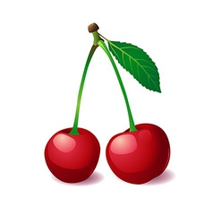 Two cherries with leaf vector