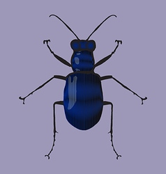 Blue beetle vector