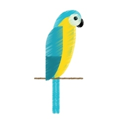 drawing blue and yellow macaw parrot brazil vector image