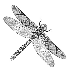 Zentangle stylized dragonfly Sketch for tattoo or vector image vector image
