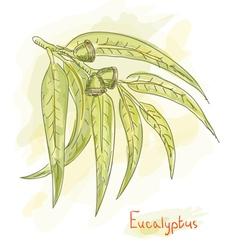 eucalyptus branch watercolor vector image