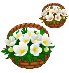 Beautiful bouquet of white flowers in straw basket vector