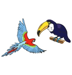 Macaw and toucan vector