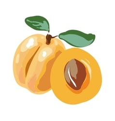 Fresh cut apricot fruits isolated on white vector