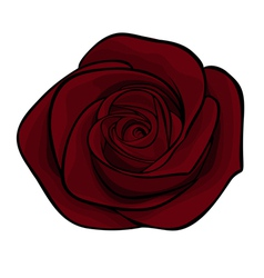 Beautiful maroon roses alone isolated on a white b vector