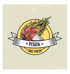 pitaya or dragon fruit vintage hand drawn fresh vector image