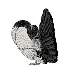 Hand drawn dove vector