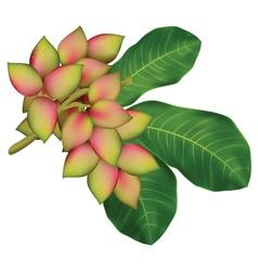 pistachio tree branch vector image vector image