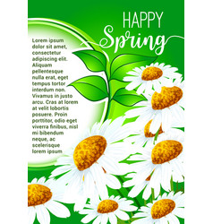 Happy spring greeting card with daisy flowers vector