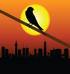 Sparrow with city in background vector