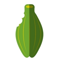 Papaya tropical fruit icon vector