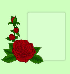 bouquet of red roses design frame with floral vector image