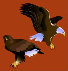 eagles vector image vector image