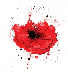 painted poppy vector image