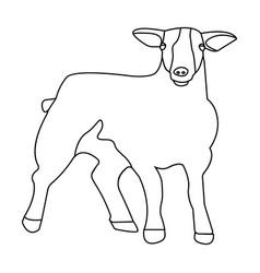Little white mountain sheepscottish fold sheep vector