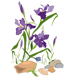 Hand drawn iris blooms vector