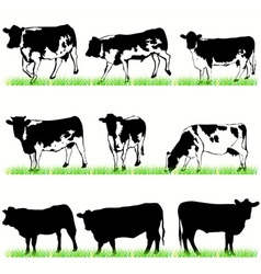 cows bulls vector image vector image