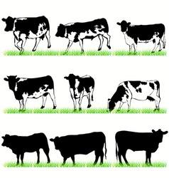 Cows bulls vector