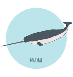 narwal whale vector image