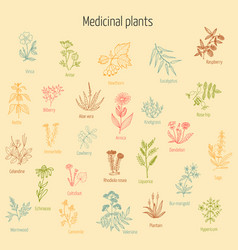 Set of hand drawn medicinal herbs vector