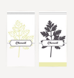 Hand drawn chervil in outline and silhouette style vector