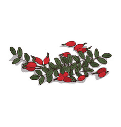Isolated clipart rose hips vector