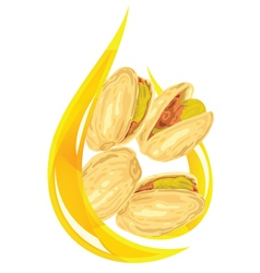 pistachio oil stylized drop vector image vector image