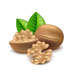 Walnuts isolated on white vector image vector image