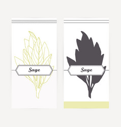 Hand drawn sage in outline and silhouette style vector