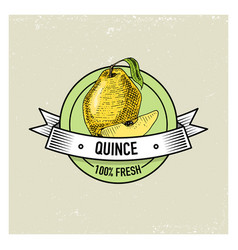 Quince vintage hand drawn fresh fruits background vector