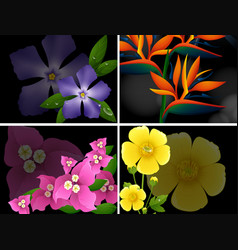 four different kinds of flowers on black vector image