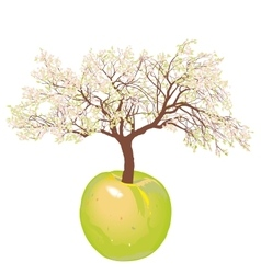 Blossoming new apple tree vector image vector image