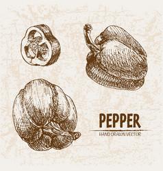 digital detailed line art pepper vegetable vector image vector image