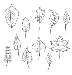 Outlined black and white leaves in flat style set vector image vector image