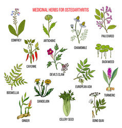Best medicinal herbs for osteoarthritis vector