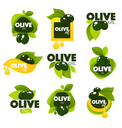 Green olive leaves lettering compositions and oil vector