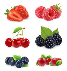 Forest berry sweet fruit realistic 3d icon set vector