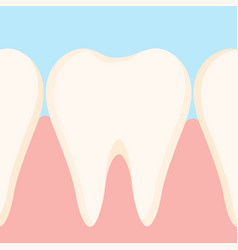 Gums and teeth vector