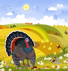 Lovely turkey in autumn sunny day happy vector